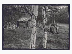 Caj Bremer: Kaloja kuivatellaan Pirttilahdella Vienan Karjalassa, 1979.